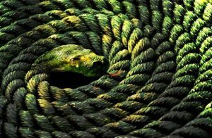 rope-snake-advaita-vedanta-analogy-metaphor-analogy-example-meaning