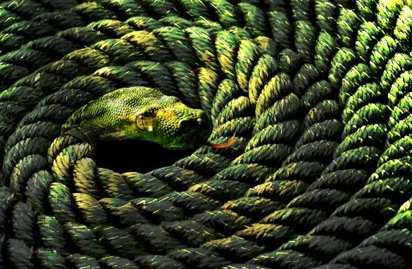 rope-snake-advaita-vedanta-analogy-metaphor